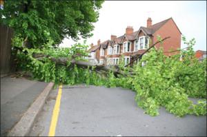 emergency tree removal memphis