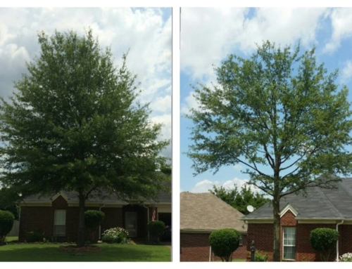 Let our tree professionals care for your trees
