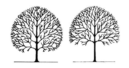 Tree Elevating Memphis