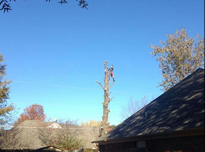 tree removal memphis