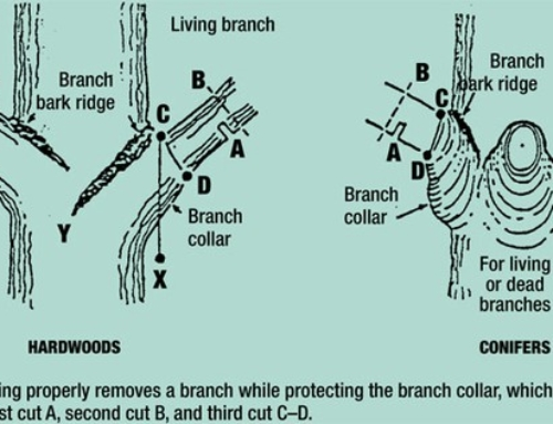 Learn How to Properly Prune Your Trees