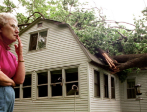 Emergency Tree Care & Tree Assessment Memphis