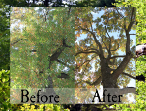 thinning-trees-and-clean-outs