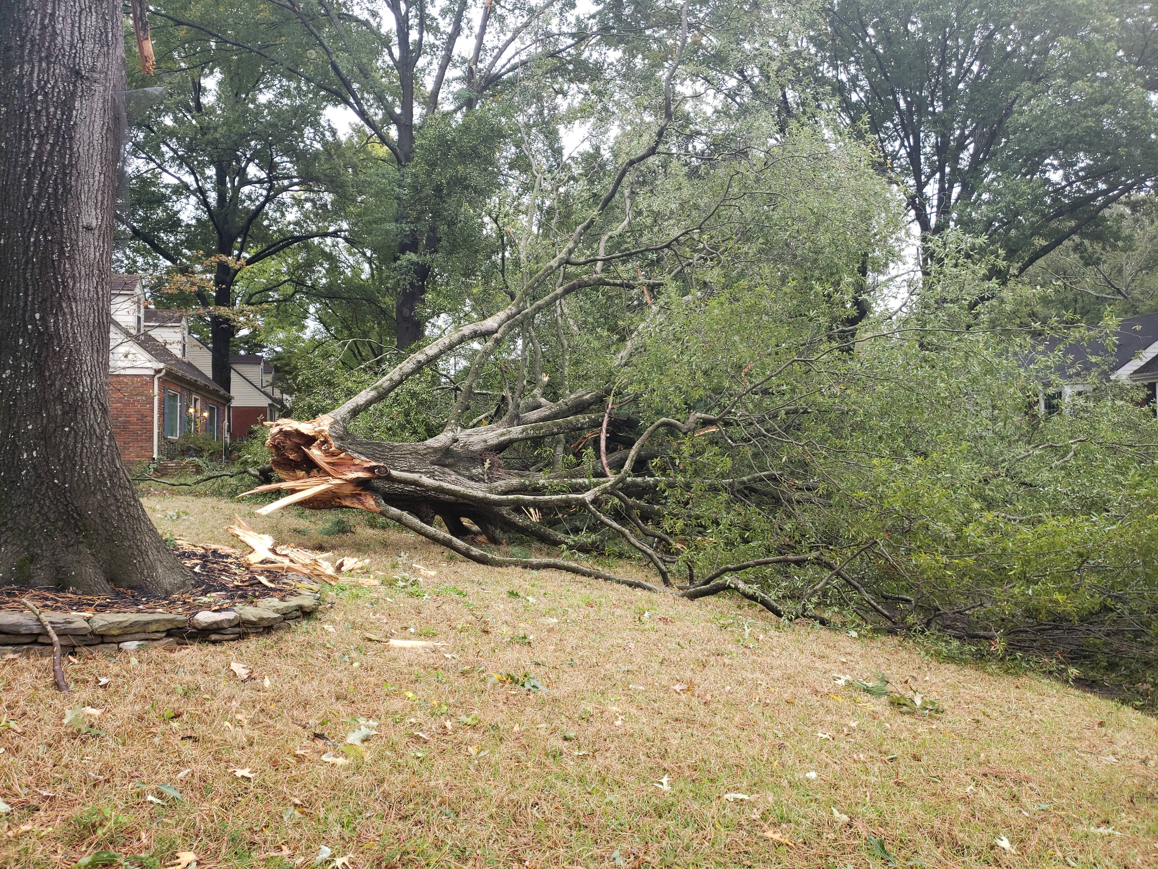 Storm Damaged Tree Removal and Clean-up Memphis